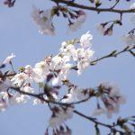 チャリで春を散策中!【2017/04/06】